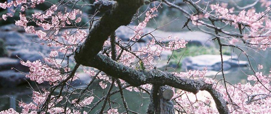 【参加者大募集】 4月のIGersJPインスタミート @成田山 !